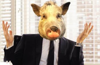 Pig_Shrug